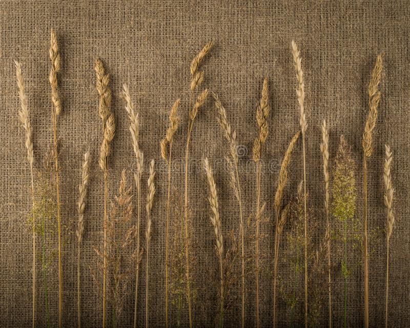 Composition of cut dried grass. Autumn concept royalty free stock photography