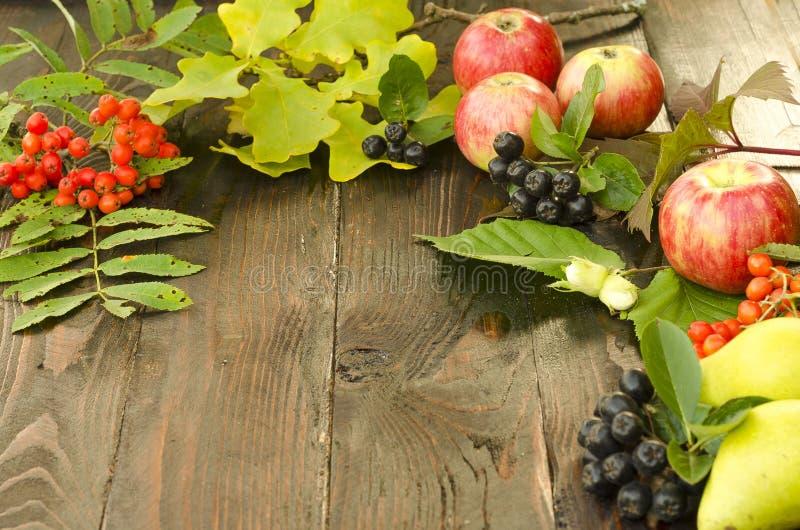 Composition d'automne des feuilles juteuses lumineuses, poires, baies de sorbe, pommes sur un fond en bois foncé brun photos stock