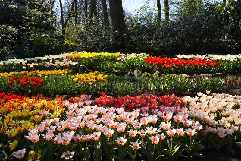 Composition de différentes tulipes de couleur photo libre de droits