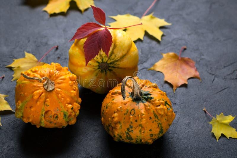 Composition de différentes variétés de mini potirons et de feuilles colorées d'automne sur le fond foncé image libre de droits