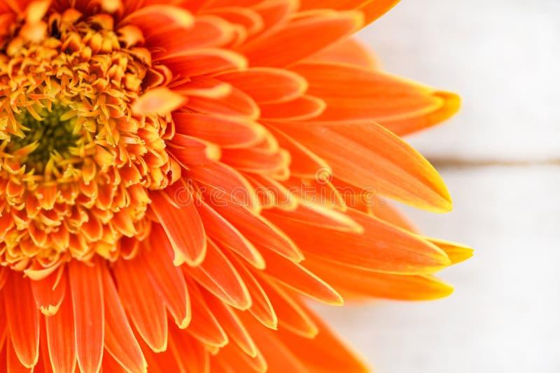 Composition de floraison de gerbera de marguerite de fleur en été orange de ressort belle sur le fond en bois blanc photo stock