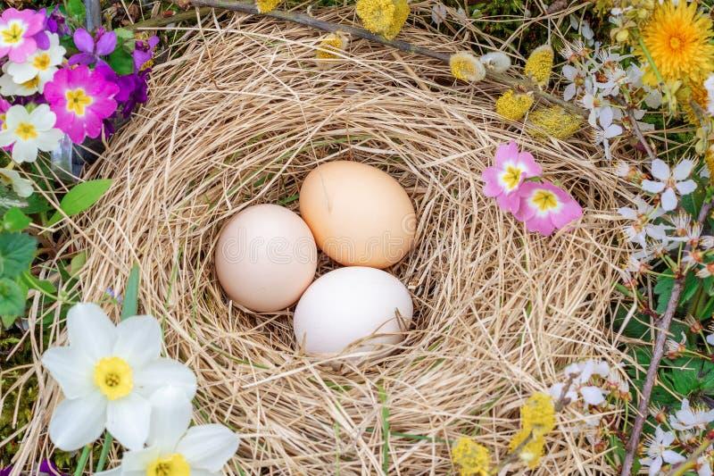 Composition de P?ques des oeufs dans un nid de paille, de brindilles de saule fleurissant et de fleurs de primev?re photos libres de droits