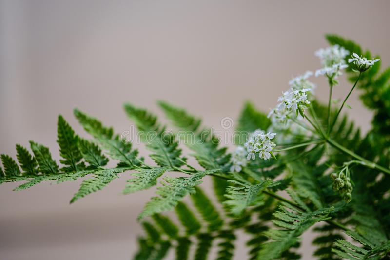composition de petites fleurs blanches et feuille de foug?re sur le fond vert de tache floue image libre de droits
