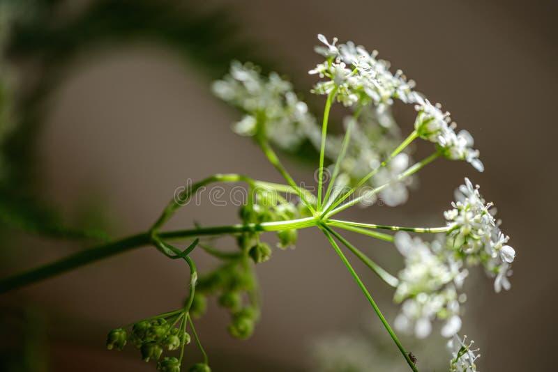 composition de petites fleurs blanches et feuille de foug?re sur le fond vert de tache floue photo libre de droits