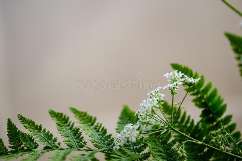 composition de petites fleurs blanches et feuille de foug?re sur le fond vert de tache floue photos stock