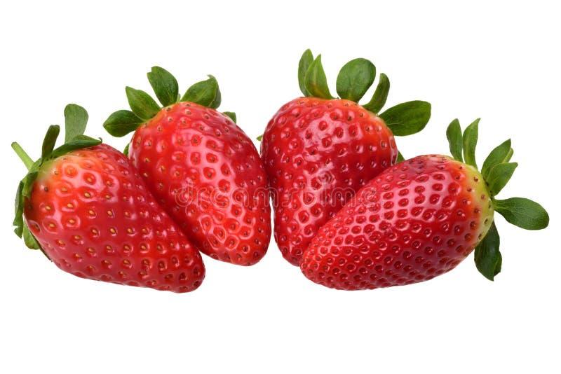 Composition de quatre fraises fraîches mûres délicieuses photos libres de droits