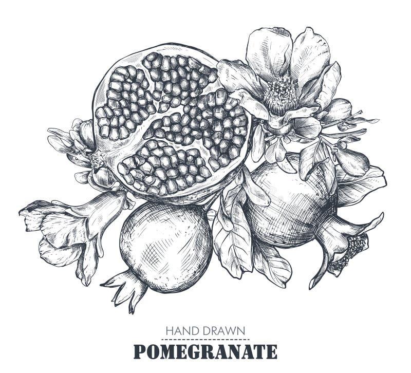 Composition de vecteur des fruits de grenade, fleurs, branches illustration stock