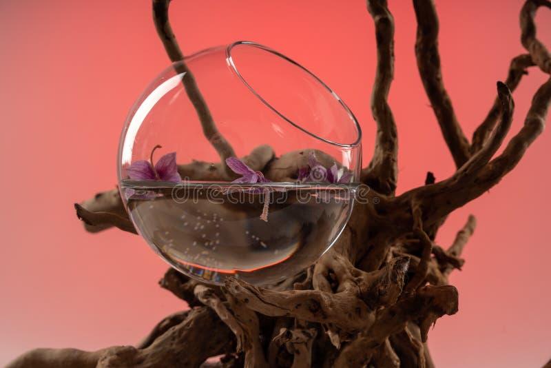 Composition des feuilles tombées d'orchidée dans un vase avec l'eau et un accroc en bois 2 photo stock