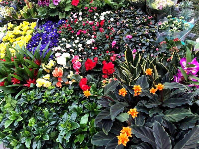 Composition des fleurs color?es naturelles en parc de ville image libre de droits