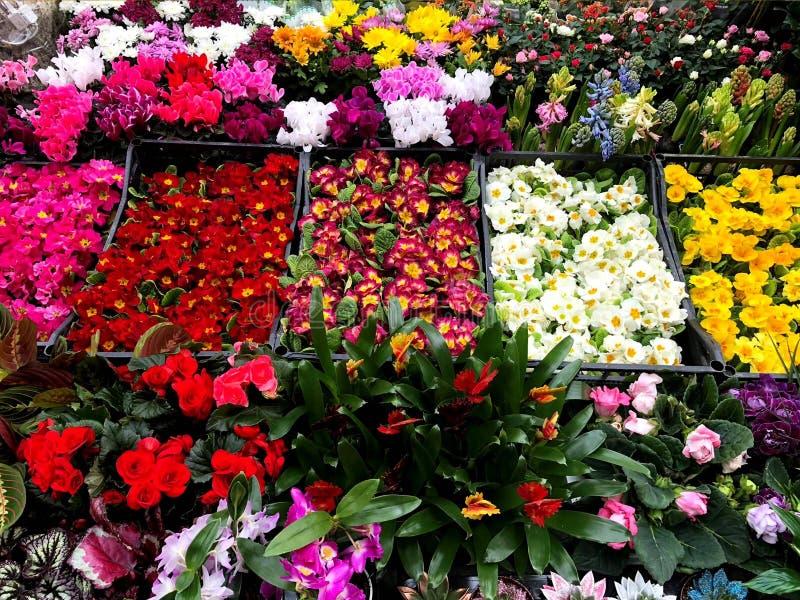 Composition des fleurs color?es naturelles en parc de ville photo stock