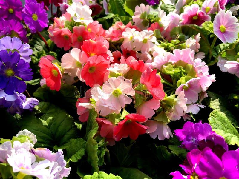 Composition des fleurs color?es naturelles en parc de ville photographie stock libre de droits