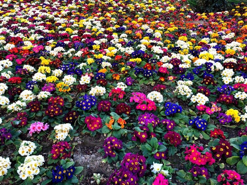 Composition des fleurs color?es naturelles en parc de ville photographie stock