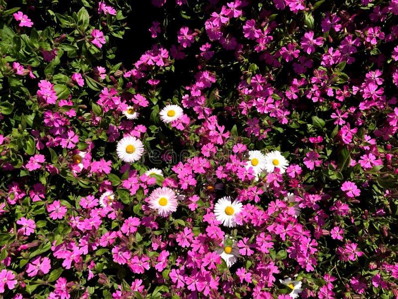 Composition des fleurs color?es naturelles en parc de ville images stock