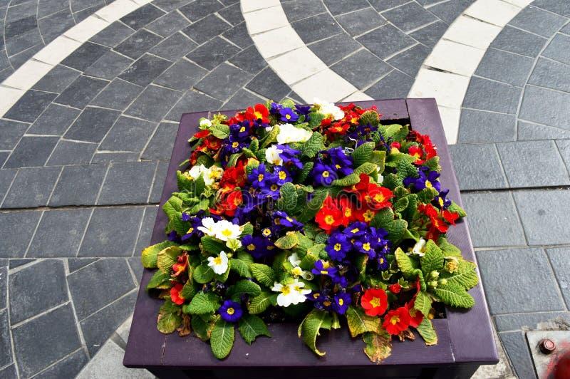 Composition des fleurs color?es naturelles en parc de ville photo libre de droits