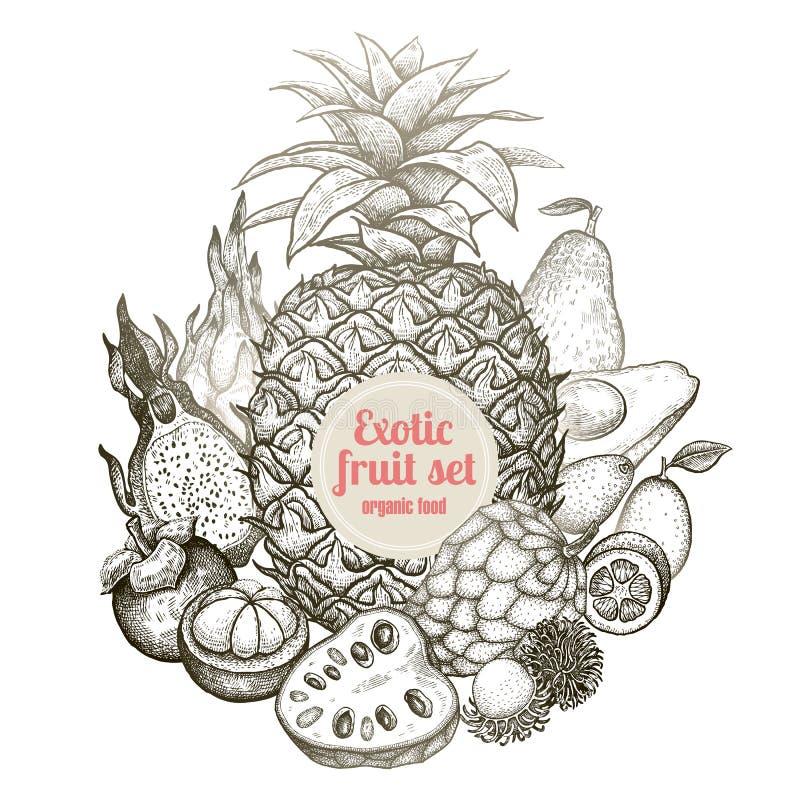 Composition des fruits exotiques illustration de vecteur