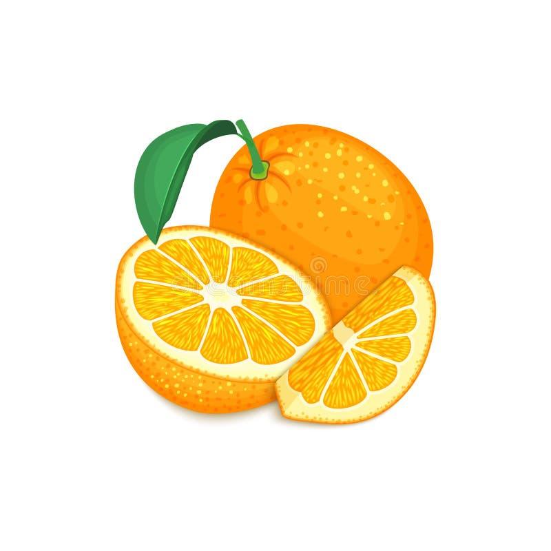 Composition des fruits oranges tropicaux Fruit orange d'agrume mûr de vecteur entier et regard appétissant de tranche Groupe de illustration libre de droits