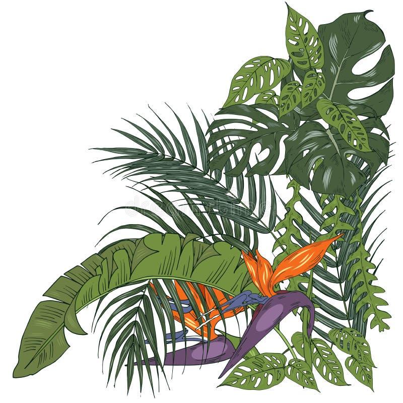 Composition des plantes tropicales et des fleurs de strelitzia illustration de vecteur