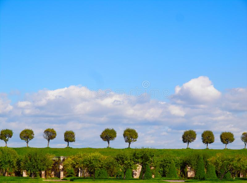 Composition of detached trees on a hill stock photos