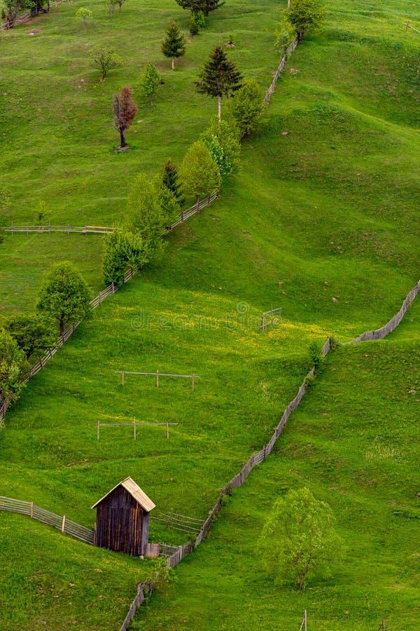 Composition diagonale des arbres verts crus et une grange dans Bucovina, Roumanie photos libres de droits