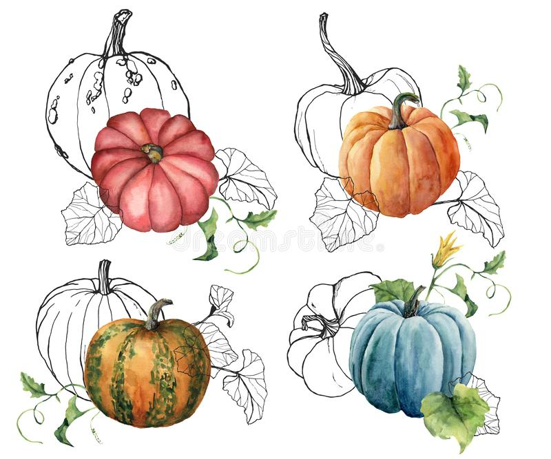 Composition en aquarelle avec les courges linéaires Potirons peints à la main et feuilles rouges, bleus, oranges d'isolement sur  illustration de vecteur