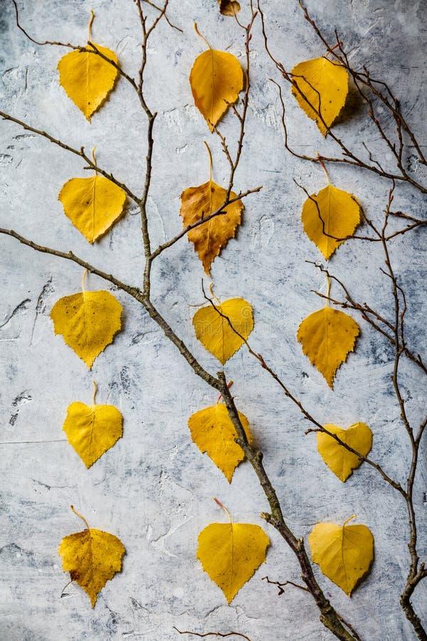 Composition en automne faite de feuilles et branches sèches photo stock