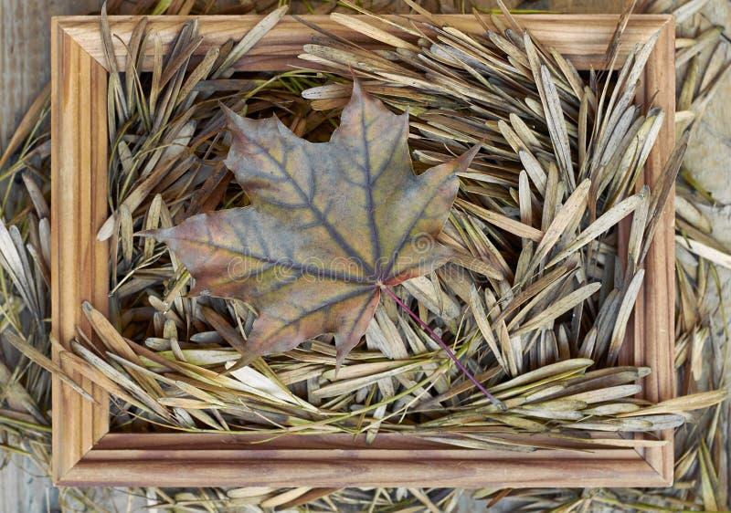 Composition en cadre d'automne avec la feuille et les graines d'érable sèches image stock