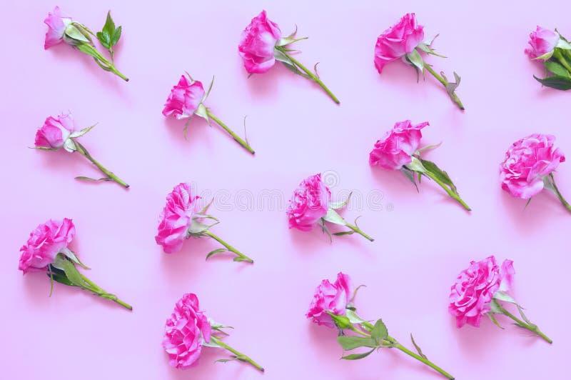 Composition en fleurs de Rose sur le fond rose image libre de droits