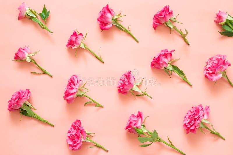 Composition en fleurs de Rose sur le fond rose photographie stock libre de droits