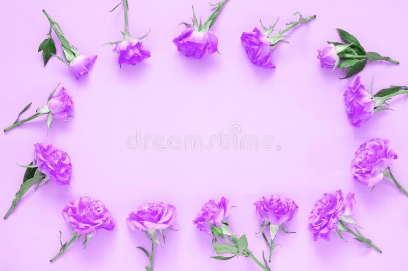 Composition en fleurs de Rose sur le fond rose photos libres de droits