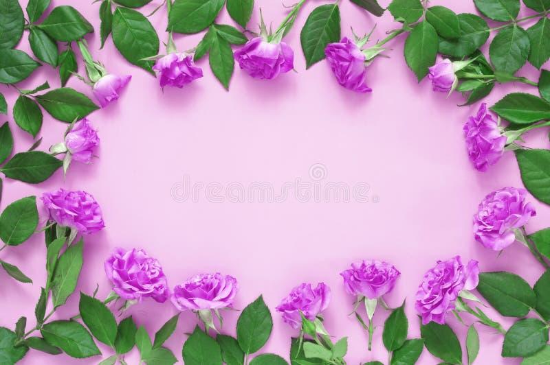 Composition en fleurs de Rose sur le fond rose images libres de droits