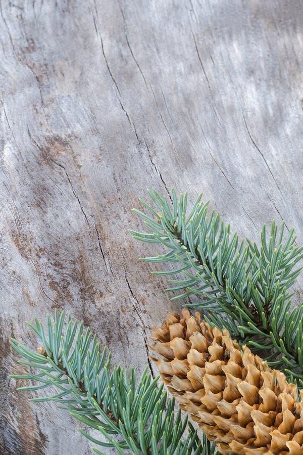 Composition en Noël : Branches fraîches de sapin bleu avec des cônes sur le fond en bois âgé Vue supérieure photos libres de droits