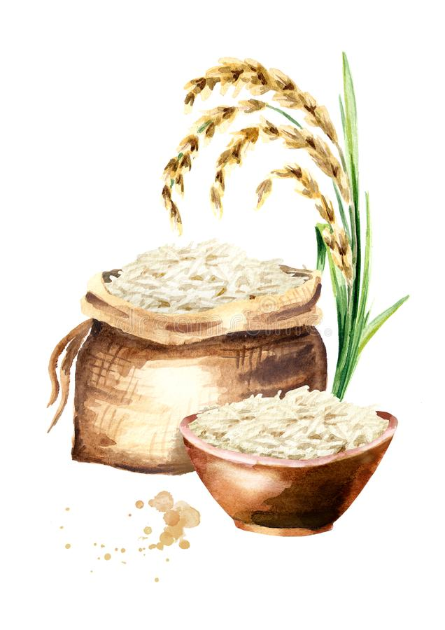 Composition en verticale de riz blanc Illustration tirée par la main d'aquarelle, d'isolement sur le fond blanc illustration libre de droits