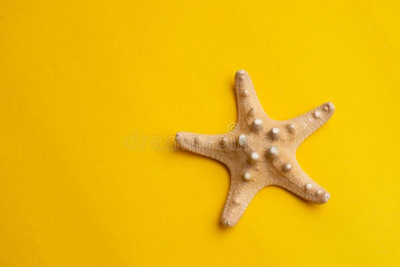 Composition of exotic sea shell on a yellow background. Summer, holiday, vacation and sea concept. Copyspace for text. Top view. Composition of exotic sea shell stock image