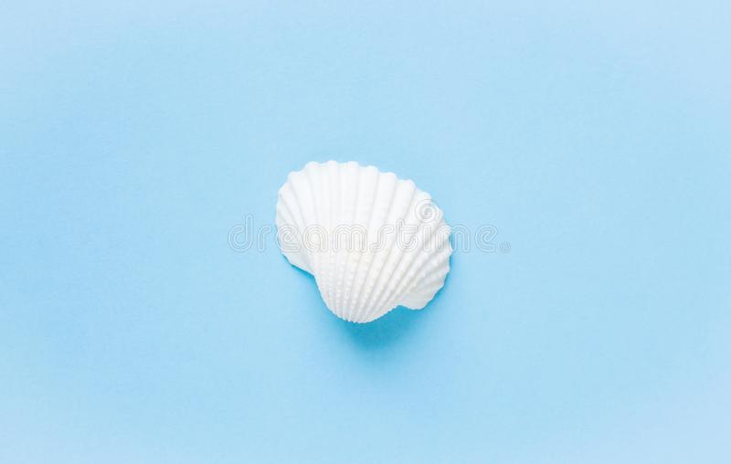 Composition of exotic sea shells on a blue background. Summer concept royalty free stock images