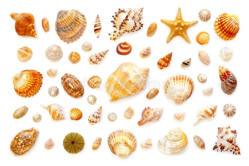 Composition of exotic sea shells and starfish on a white background. top view. Pattern of exotic sea shells and starfish on a white background. top view royalty free stock photo