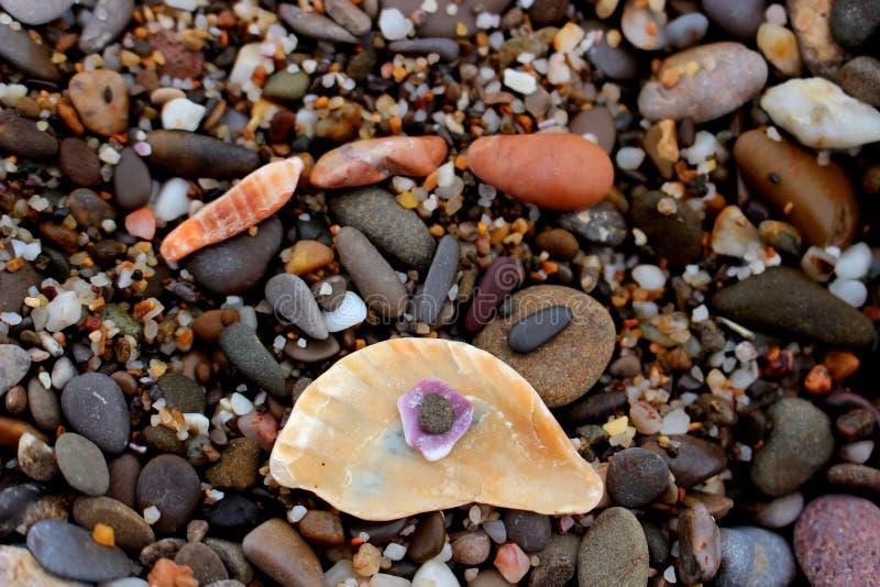 Pebbles on the beach with seashells royalty free stock photos