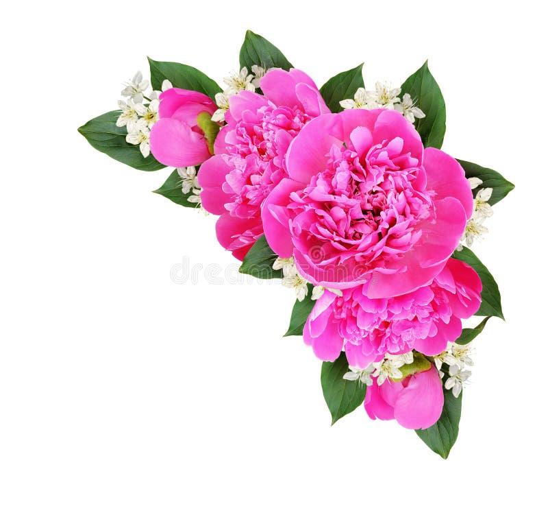 Composition faisante le coin avec les pivoines roses et les petites fleurs blanches images libres de droits