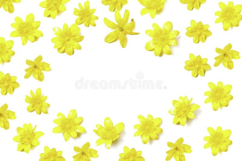 Composition florale de forme ovale des fleurs jaunes lumineuses sur le blanc images libres de droits