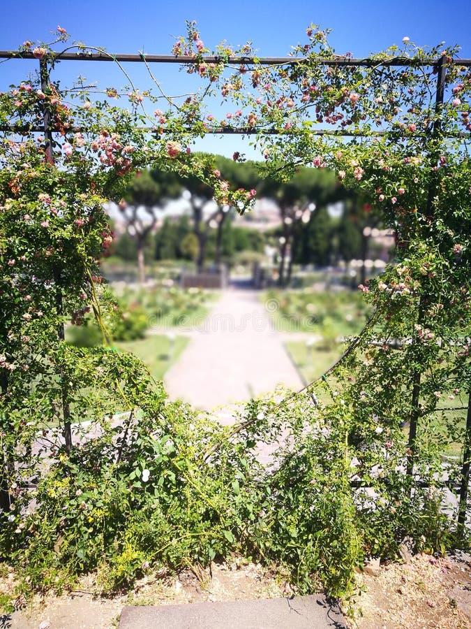 Composition florale en coeur photographie stock