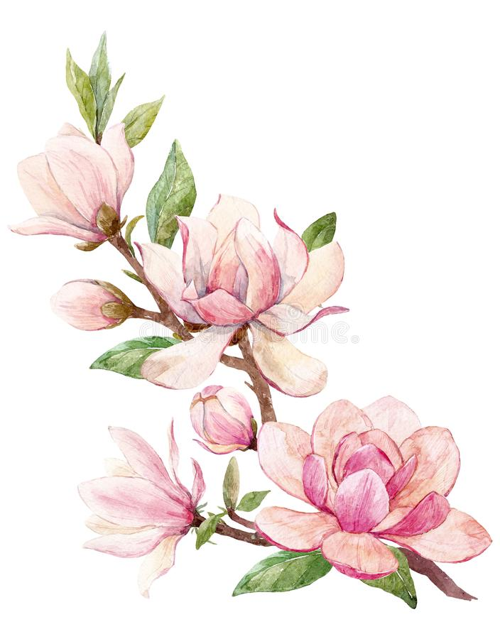 Composition florale en magnolia d'aquarelle illustration libre de droits