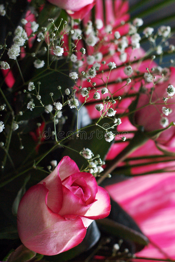 Download Composition Of Flowers Royalty Free Stock Image - Image: 6200966