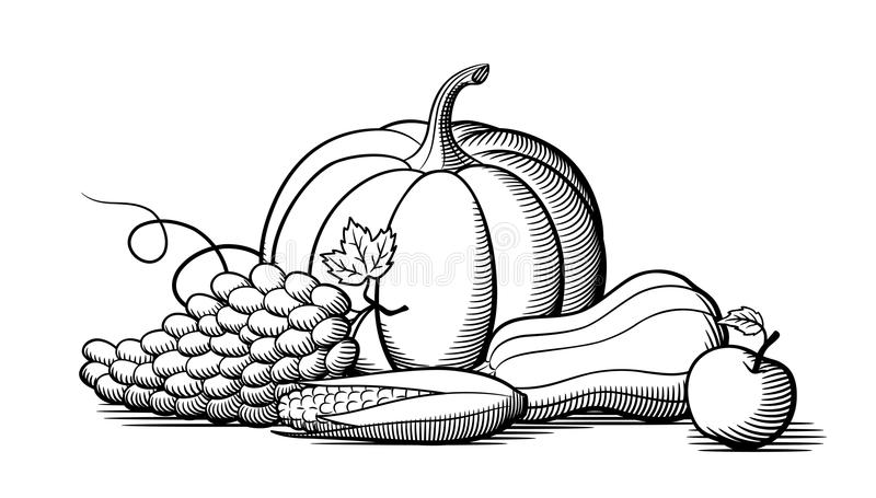 Composition of fresh ripe fruits and vegetables. Black and white. Composition of fresh ripe fruits and vegetables. Pumpkin, grapes, corn and butternut squash royalty free illustration