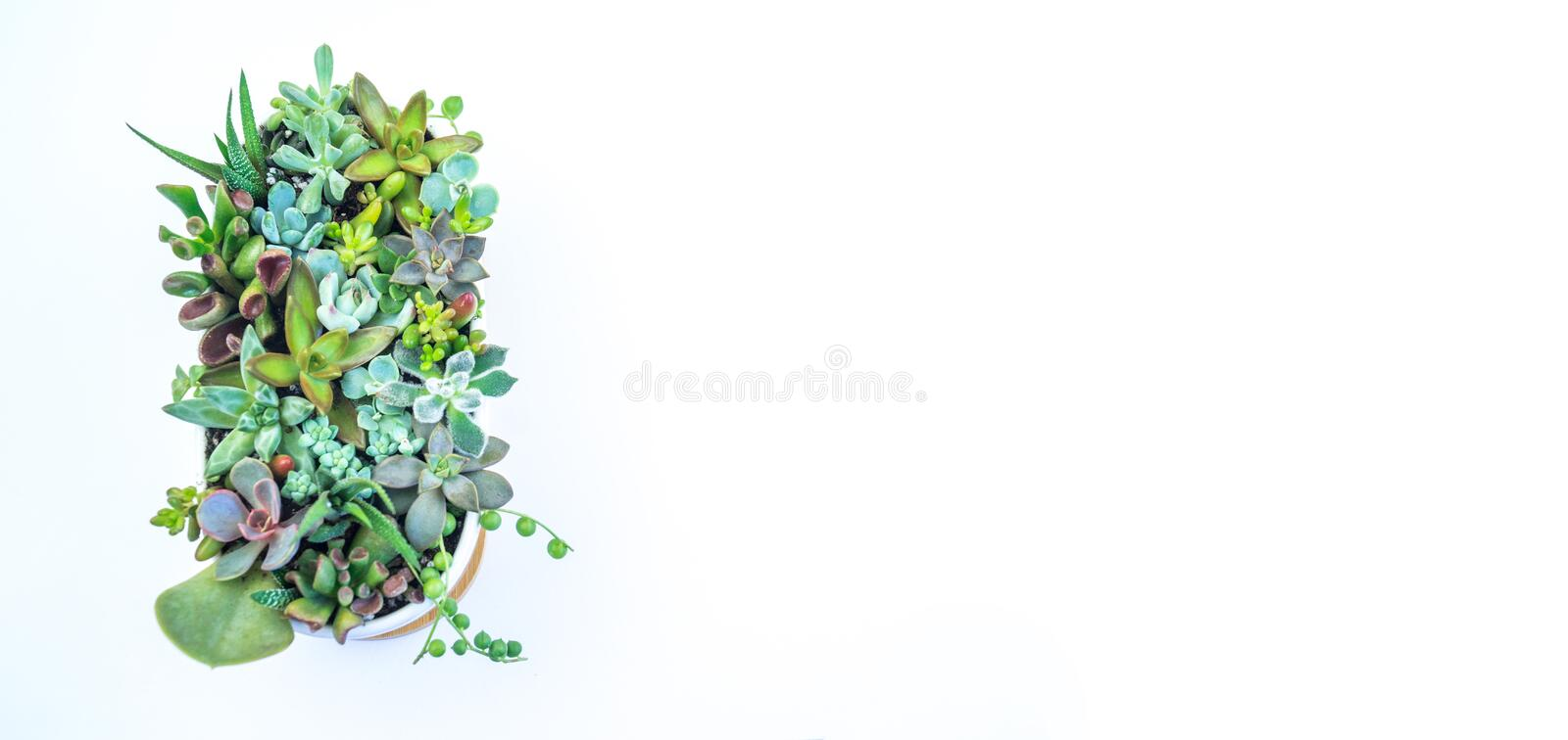 Composition green and blue succulents ceramic pot. stock photography