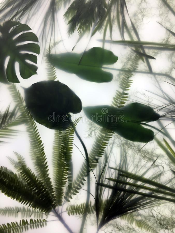 Green leaves behind frosted translucent glass. Composition of green leaves and moss behind frosted translucent glass, muar fog effect royalty free stock image