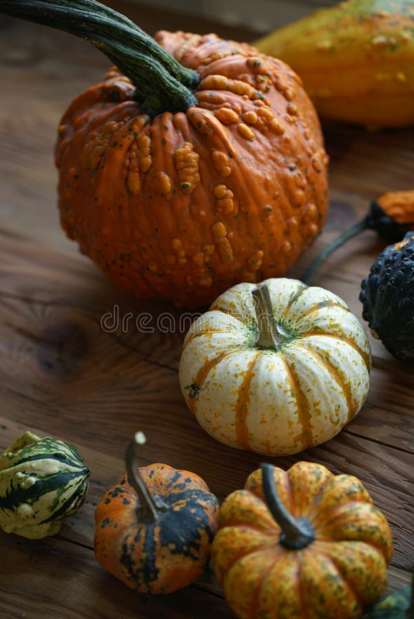 Composition with halloween pumpkins stock photo