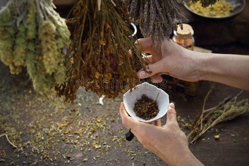 Herbalist. The woman prepares medicinal herbal mixtures. A composition of herbs, flowers and spices. Healthful potions and infusions on a wooden table stock image