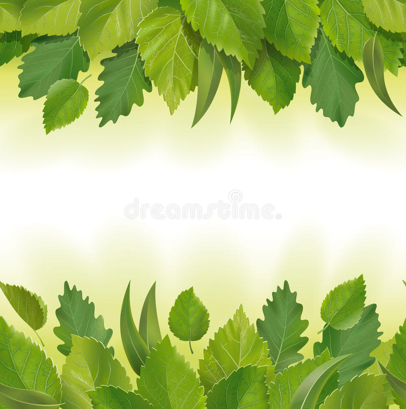 Composition of the leaves (birch, oak, eucalyptus) stock image