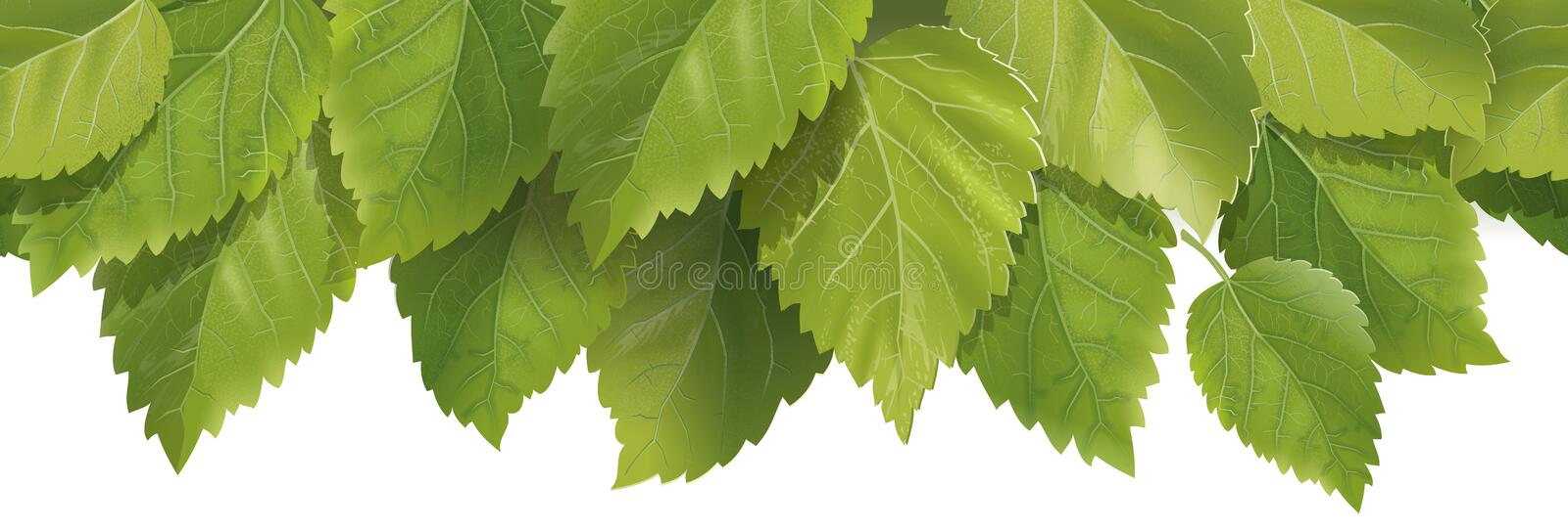 Composition of the leaves stock images