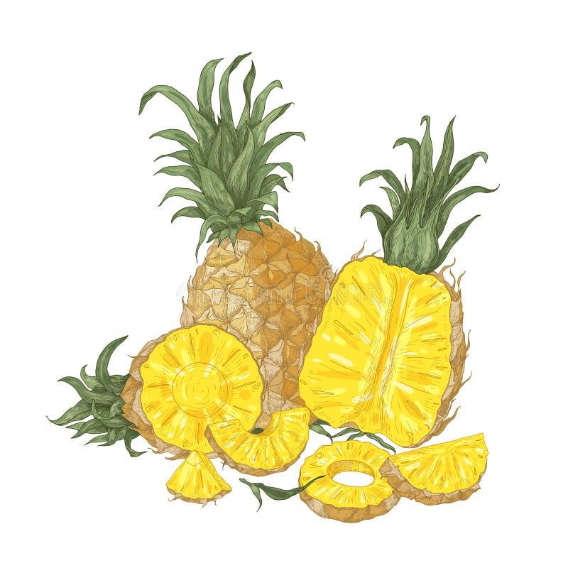 Composition naturelle décorative avec ananas et tranches organiques frais entiers et de coupe d'isolement sur le fond blanc illustration de vecteur