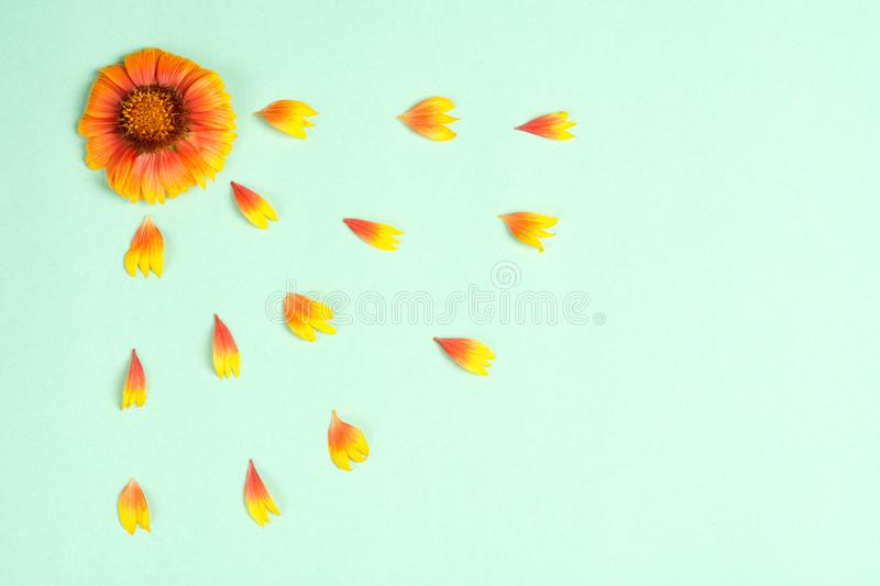 Composition of orange flower and petals on a mint background. Top view, copy space. Flat lay royalty free stock photos